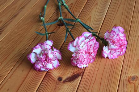 carnations: fresh carnations Stock Photo