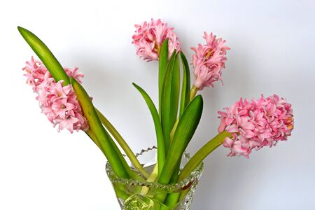 hyacinths: hyacinths in a vase Stock Photo