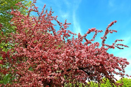 blossoming: spring blossoming Stock Photo