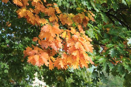 autumn paints
