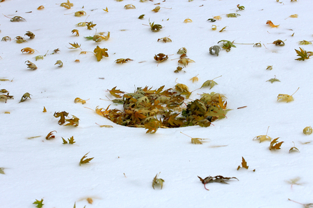 notch: yellow leaves on snow Stock Photo