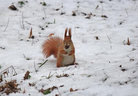 prudent: curious squirrel