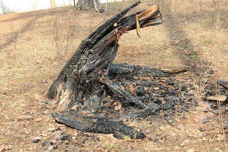 burnt tree Фото со стока