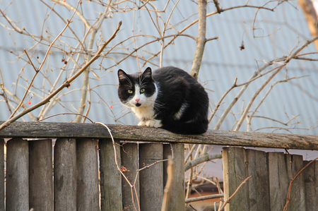 flaunt: cat on the fence Stock Photo