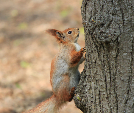 curious squirrel