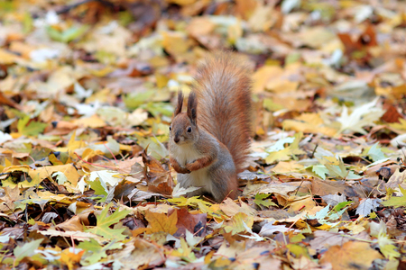 curious squirrel in the autumn park Stock Photo