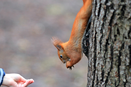 the squirrel gnaws tasty nut