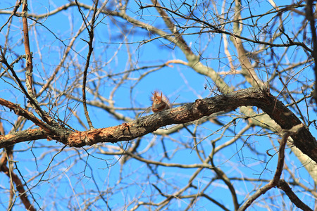 the squirrel has a rest on a branch Stock Photo
