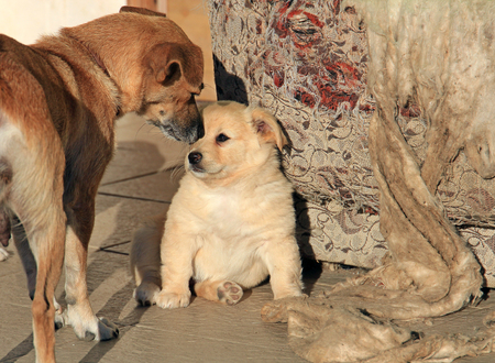 mom scolds a prankster puppy