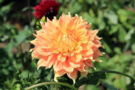 summer riot of flowers 免版税图像