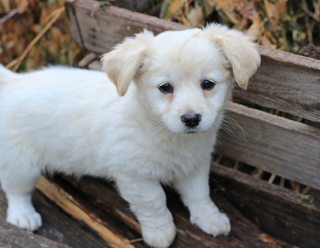 portraits of amusing little puppy