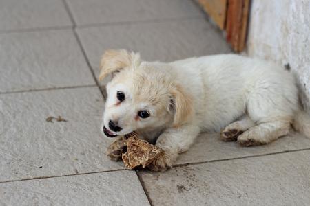 portrait of amusing little puppy