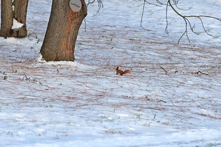 little squirrel in the wild