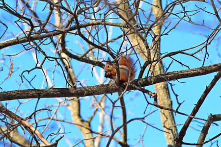 little squirrel eats a delicious nut Stock Photo