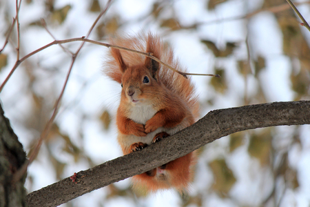 squirrel resting on a tree branch