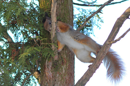 squirrel performs acrobatic exercise on a branch
