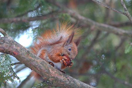 squirrel eating on tree branch
