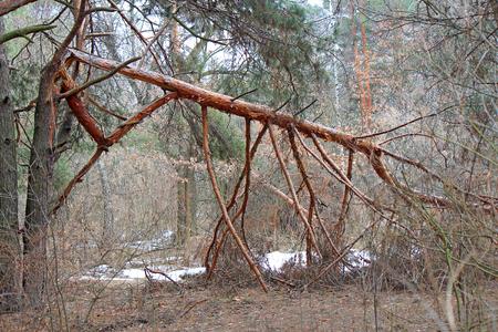 dense forest after a hurricane