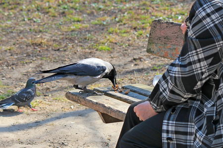 in the park an old woman feeds  the crow Standard-Bild