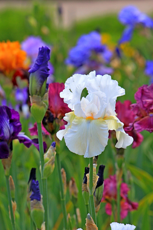 riot of spring flowering in park
