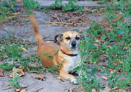 cute dog smiles at camera Stok Fotoğraf