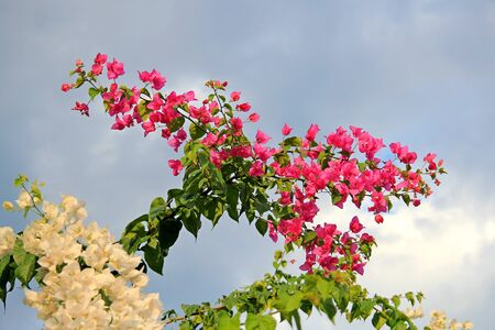 exotic southern flowers in Turkey