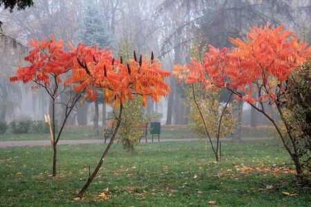 unusually bright trees in a morning park Фото со стока - 132461993
