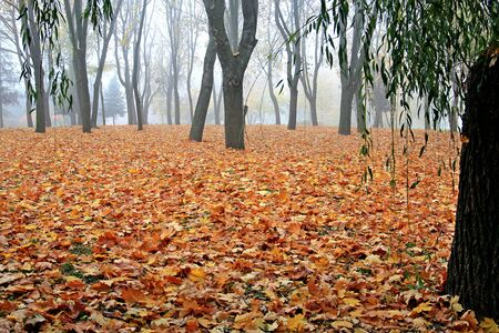 bright autumn colors in the morning park