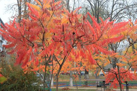 unusually bright trees in a morning square Фото со стока - 132462253