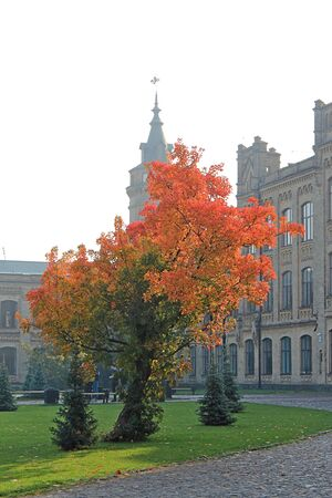 bright tree in front of the main building of the Kiev Polytechnic Institute Фото со стока - 132461975