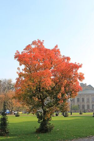 bright tree in front of the main building of the Kiev Polytechnic Institute Фото со стока - 132462187