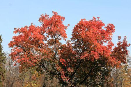 unusually bright trees in a morning park Фото со стока - 132462123