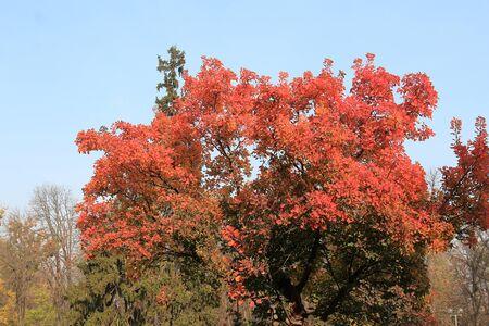 unusually bright trees in a morning park Фото со стока - 132462240