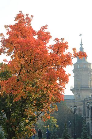 bright tree in front of the main building of the Kiev Polytechnic Institute Фото со стока - 132462013