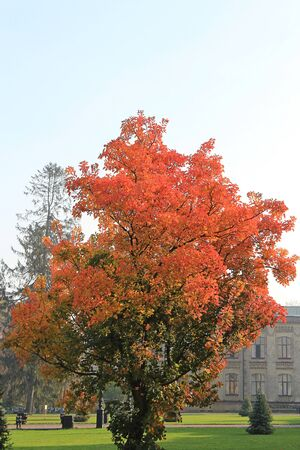 bright tree in front of the main building of the Kiev Polytechnic Institute Фото со стока - 132462194