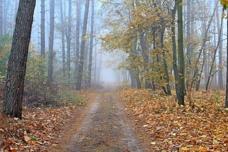 forest road in autumn foggy morning Фото со стока - 133343999