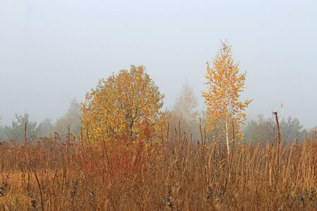 view of the gentle birches in the autumn meadow Фото со стока - 133344057