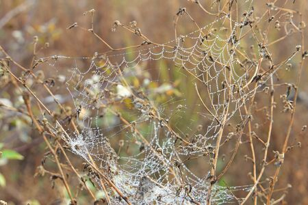 web pattern with morning dew drops Фото со стока