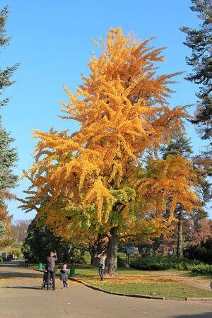 bright autumn colors in the  park Фото со стока - 132731052