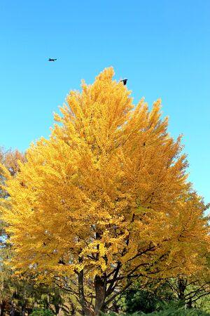 bright autumn colors in the  park Фото со стока - 132731397