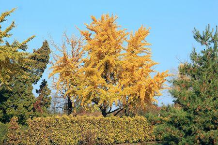 bright autumn colors in the  park Фото со стока - 133344111