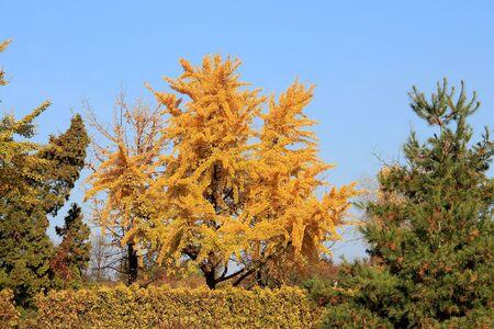 bright autumn colors in the  park Фото со стока - 133344112