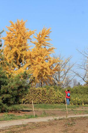 bright autumn colors in the  park Фото со стока - 132731254