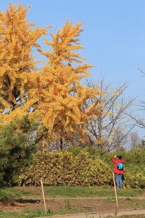 bright autumn colors in the  park Фото со стока - 132731285