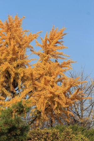 bright autumn colors in the  park Фото со стока - 133344118