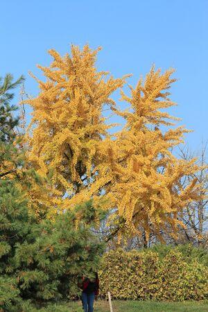 bright autumn colors in the  park Фото со стока - 132731454