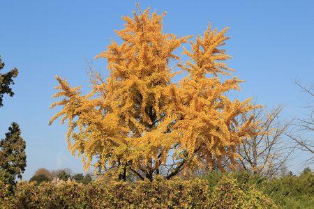 bright autumn colors in the  park Фото со стока - 132730846