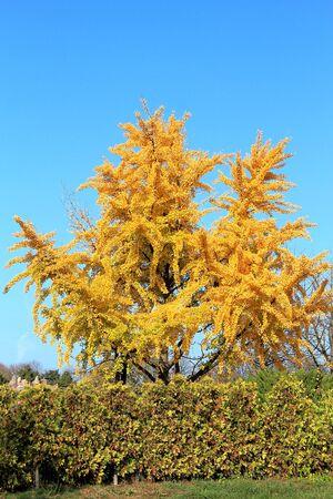 bright autumn colors in the  park Фото со стока - 132731006