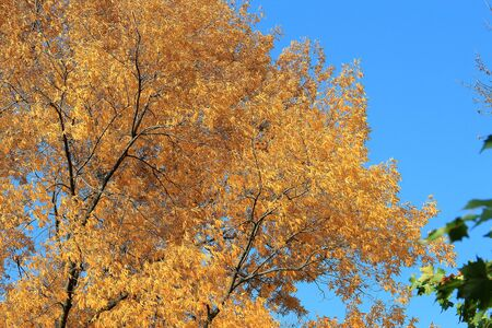 bright autumn colors in the  park