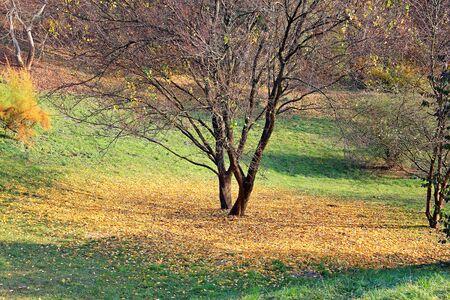 bright autumn colors in the  park Фото со стока - 132730294